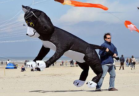 20080414 dog kite.jpg