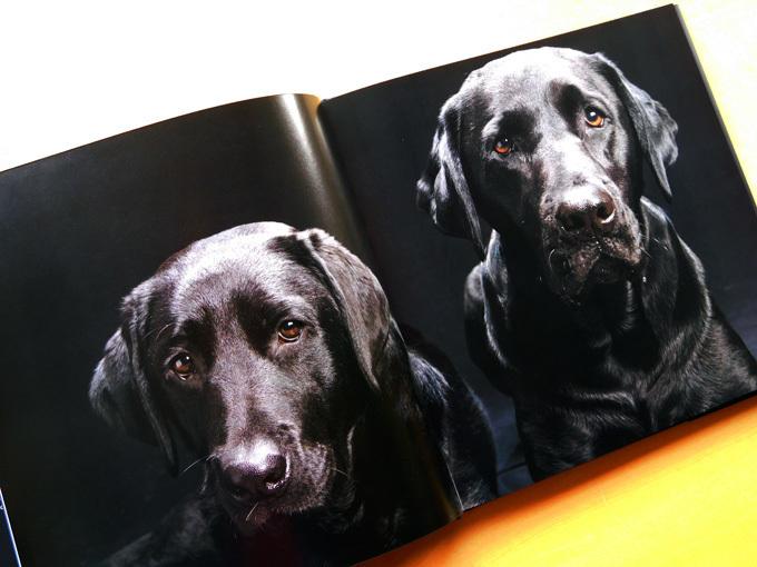 DSCN2441_黒犬写真集.jpg