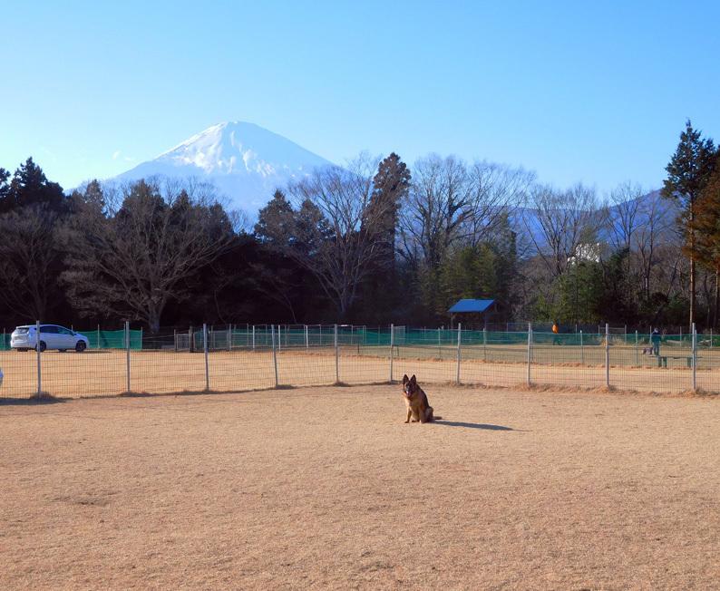 DSCN2685_足柄玉富士山_BLOG.jpg