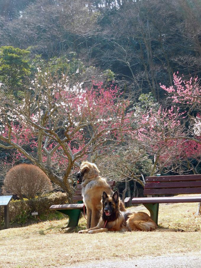 DSCN5670_玉八梅_FB.jpg
