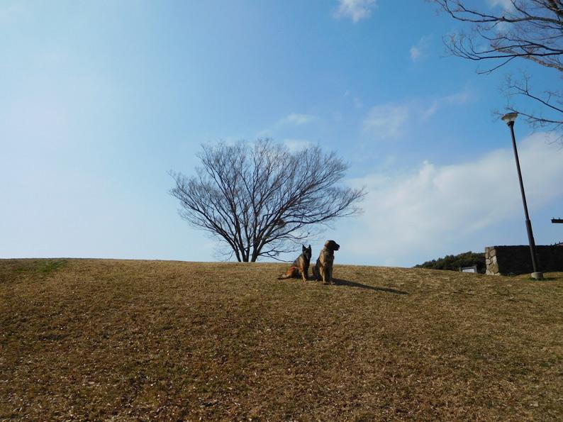 DSCN5682_玉八丘の上遠景_FB.jpg