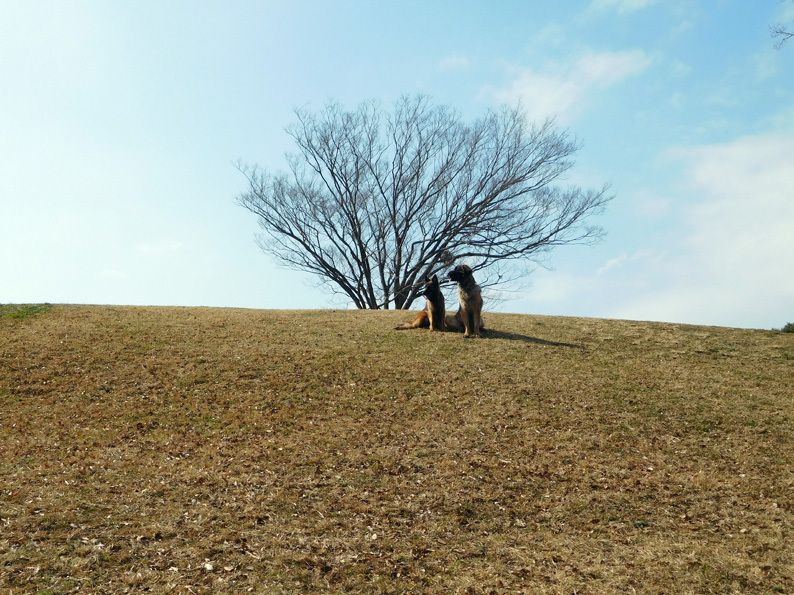 DSCN5687_玉八丘の上遠景_FBFB.jpg