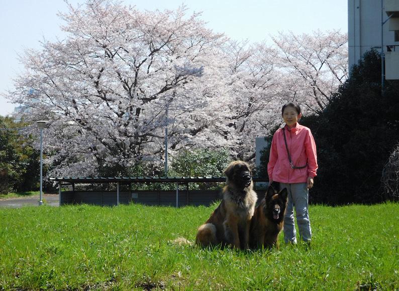 DSCN6008_のぶたまはちえへ桜いいね_FB.jpg
