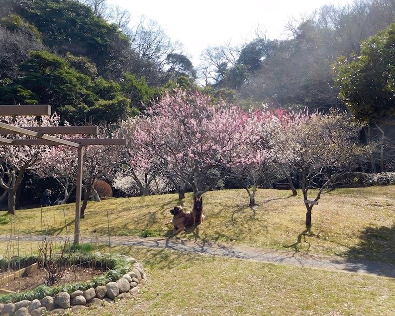DSCN8567_玉八梅見遠景_FB.jpg