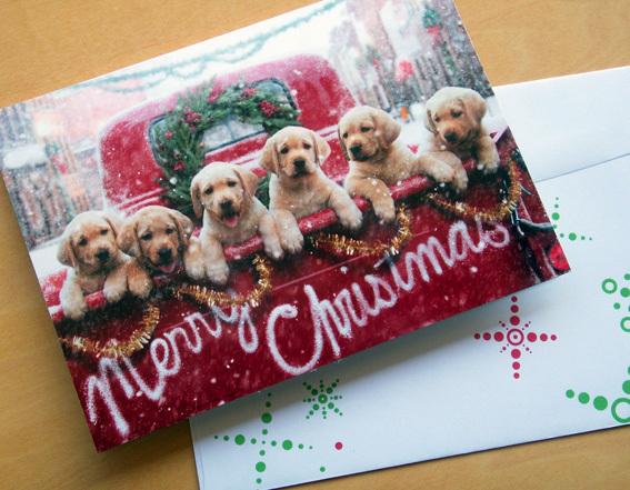 ゴルパピークリスマス_PICT0421.jpg