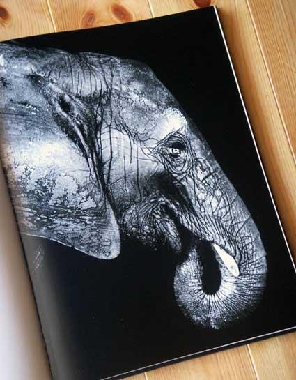 animalportrait_3.jpg