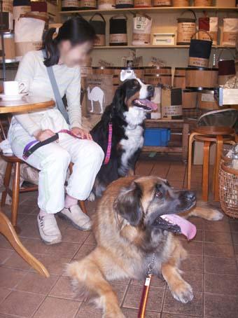 barkingcafe2.jpg