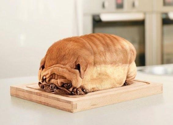 bread_dog.jpg