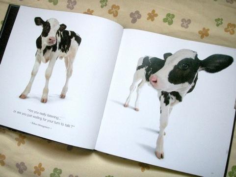 cow_2.jpg