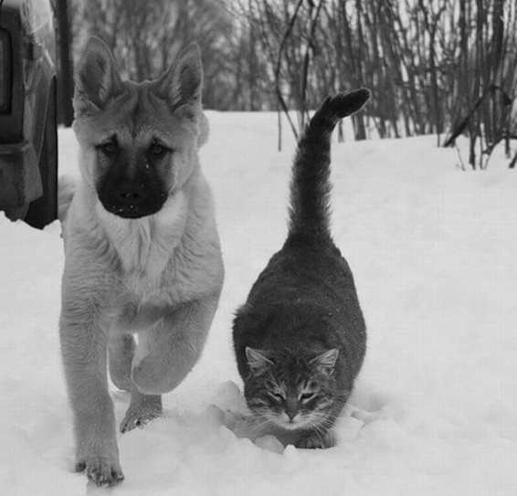 dogcat_1.jpg