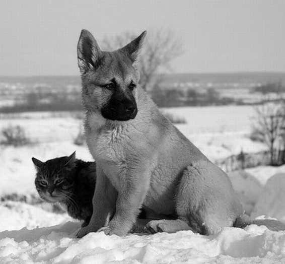 dogcat_2.jpg