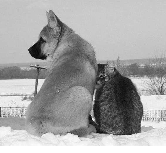 dogcat_6.jpg