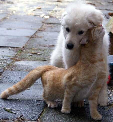 dogcat_love.jpg