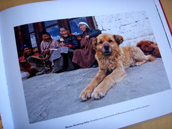 dogs_human_6.jpg