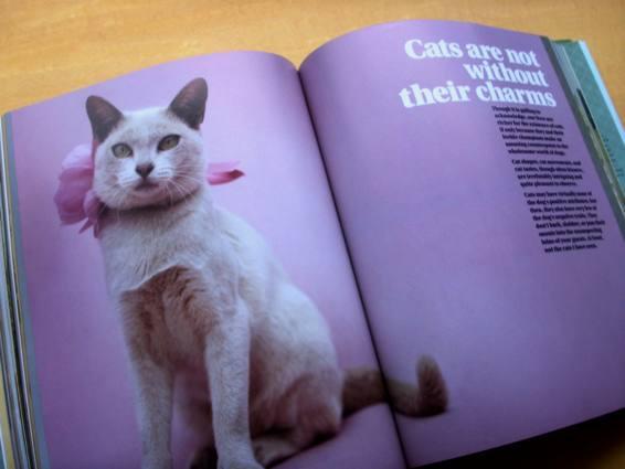 dogscats_5.jpg