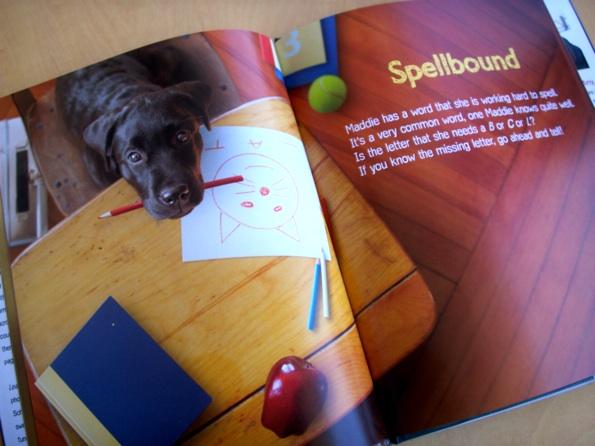 dogschool_4.jpg