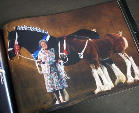 horses_4.jpg