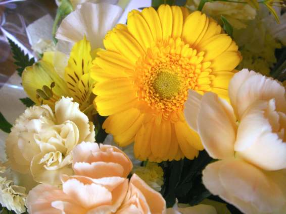 mayflower_PICT1092.jpg