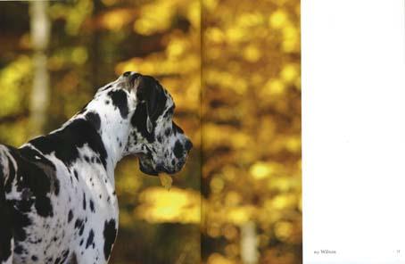 my dog2.jpg
