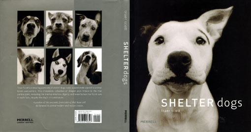 shelter dogs1.jpg