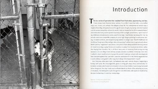 shelter dogs2.jpg