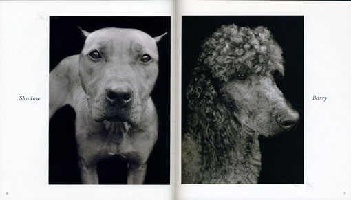 shelter dogs3.jpg