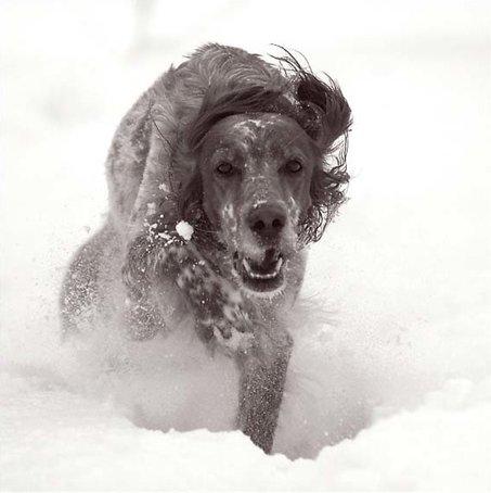 snowdog_1.jpg