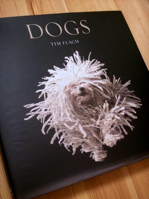 tim_dogs_01.jpg