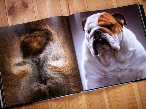 tim_dogs_05.jpg