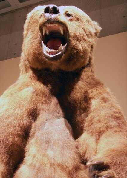 100515_bear.jpg