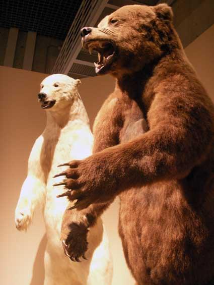 100515_bears.jpg
