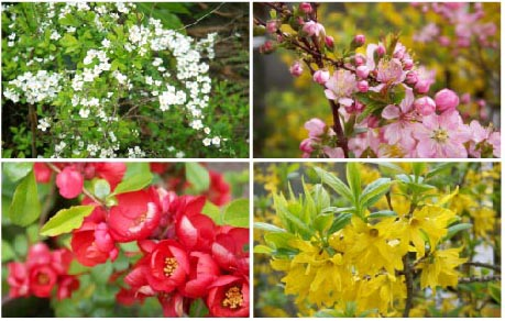 2006 spring garden.jpg