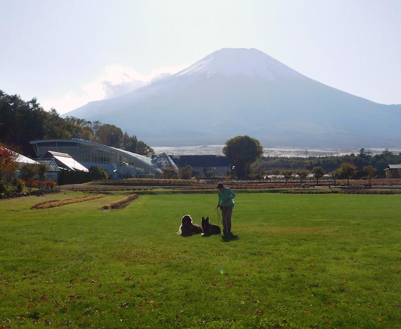 DSCN0074_のぶ玉八花の都公園富士_FB.jpg