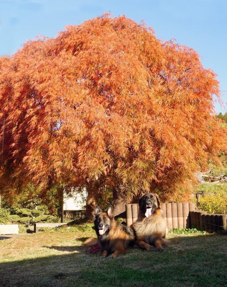 DSCN0080_玉八オレンジ色紅葉_FB.jpg