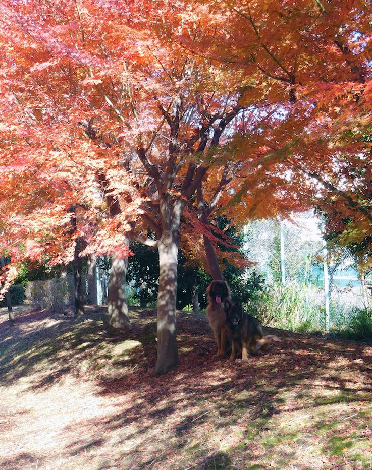 DSCN0369_玉八紅葉遠景ベスト_FB.jpg