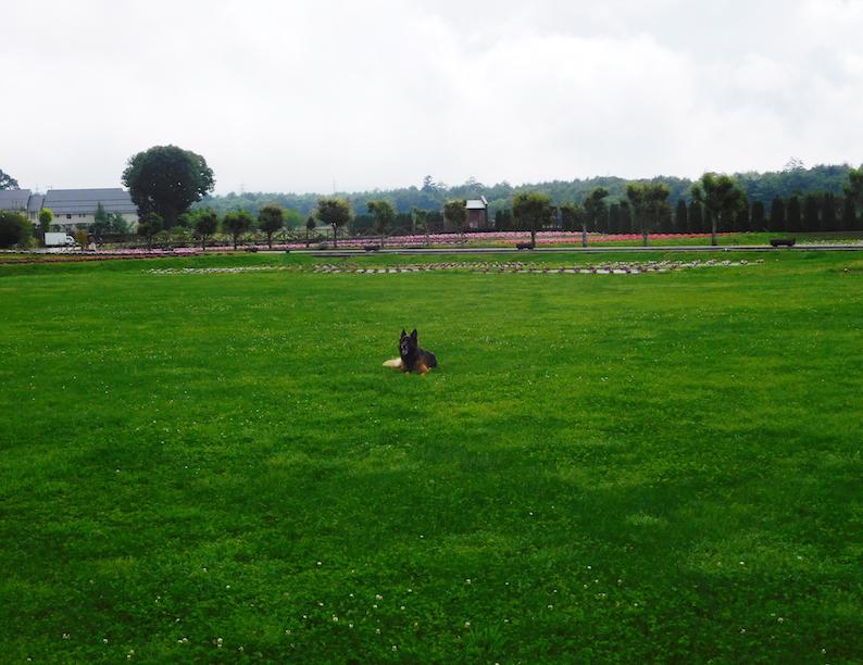 DSCN1645_テス@花の都公園芝生遠景_FB.jpg