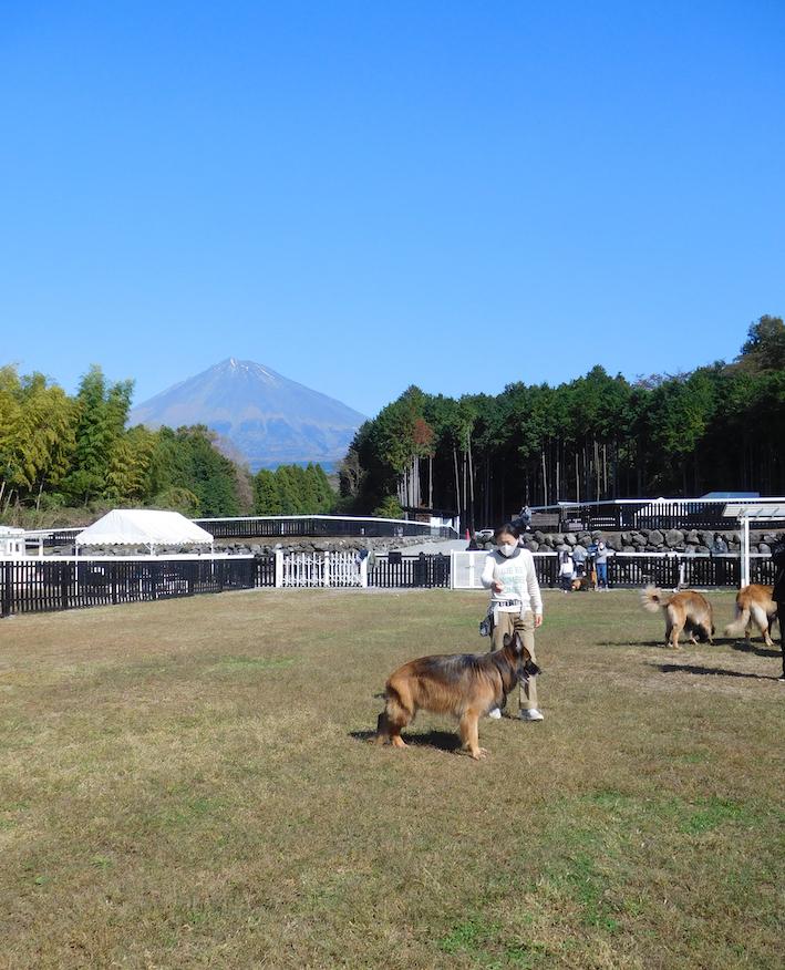 DSCN2001_のぶ玉富士山@ドッグラン_FB.jpg