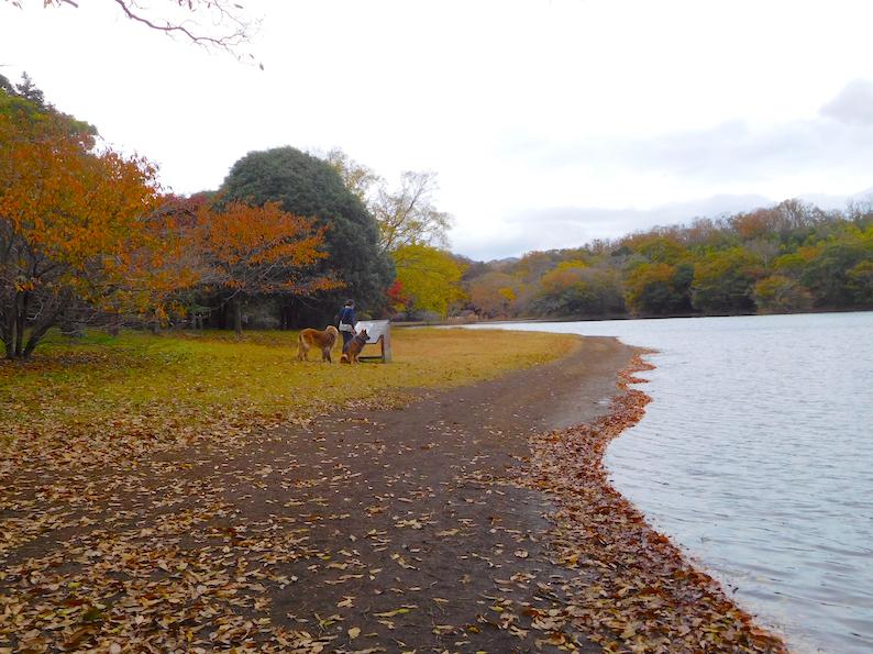 DSCN2067_のぶ玉八一碧湖湖岸_FB.jpg