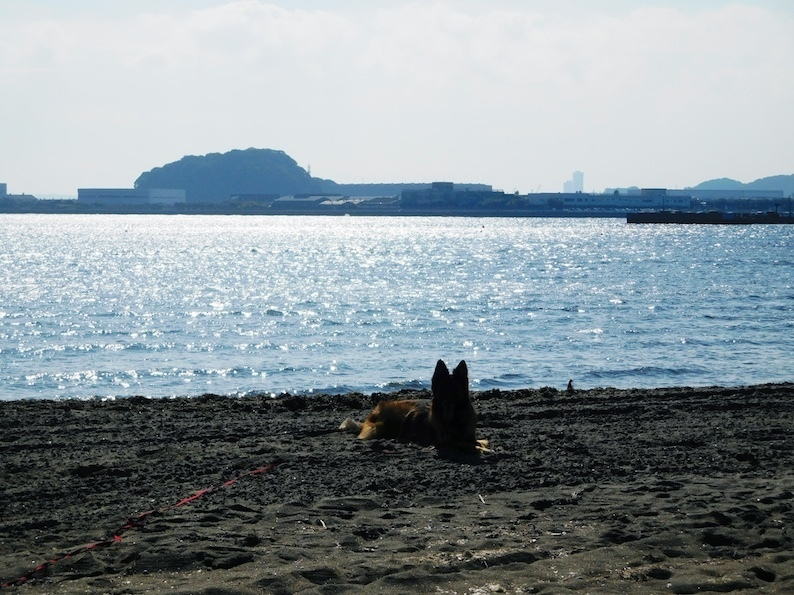 DSCN4644_キラキラ海玉シルエット_FB.jpg