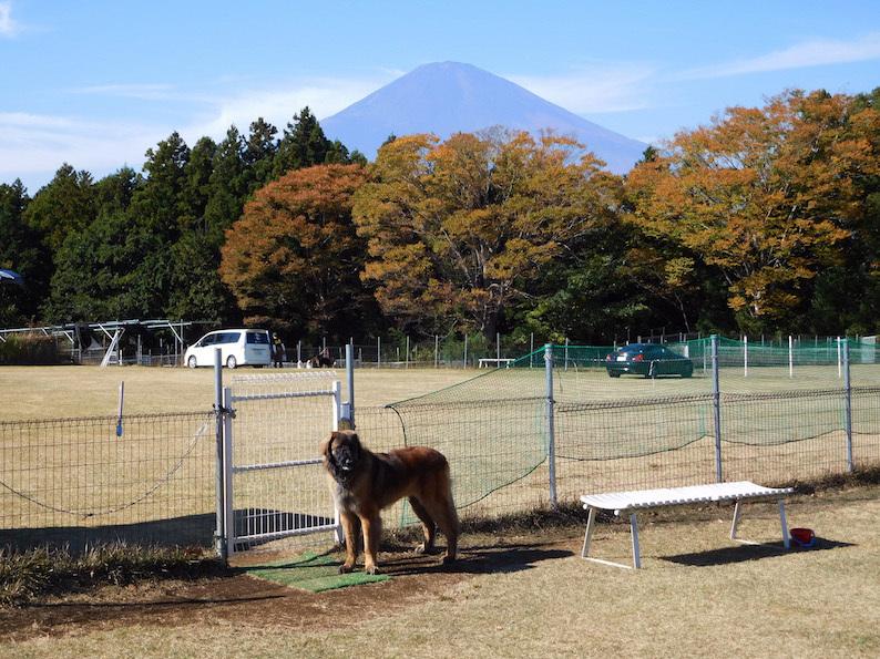 DSCN4819_足柄八フジヤマ_FB.jpg
