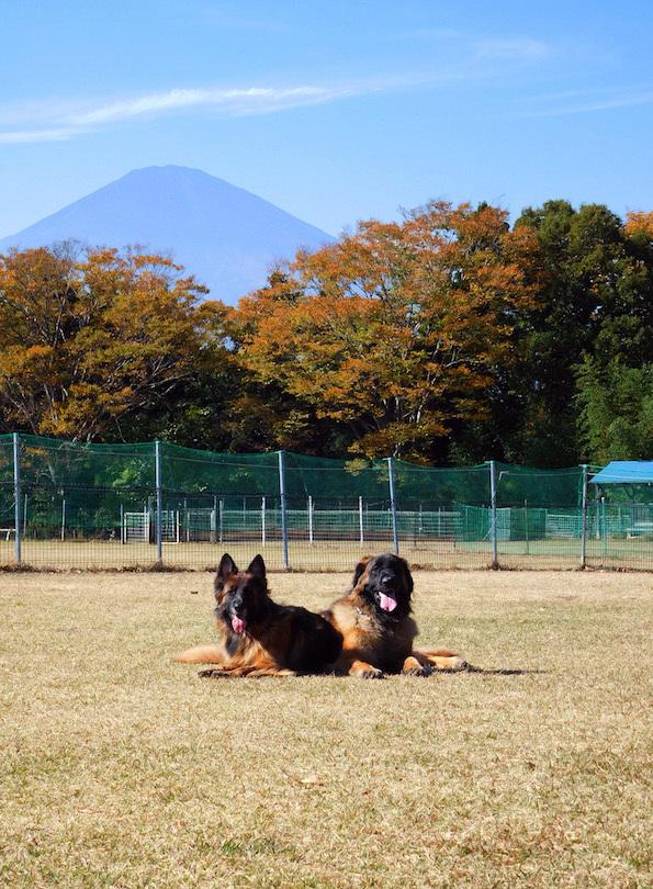 DSCN4841_足柄玉八伏せえへフジヤマ_FB.jpg