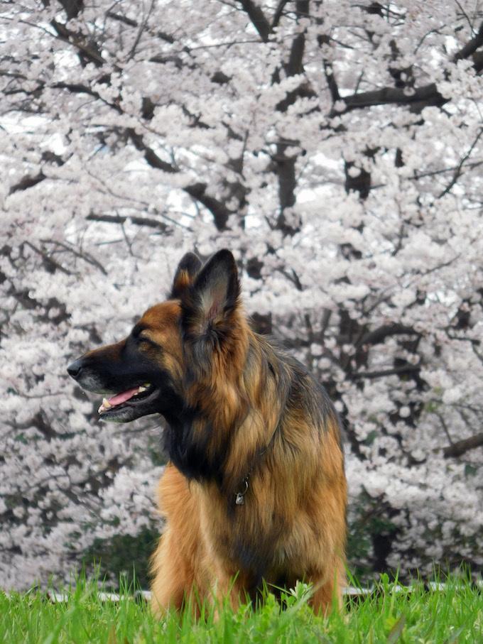 DSCN6046_玉桜やまんぽ団地横顔_FB.jpg