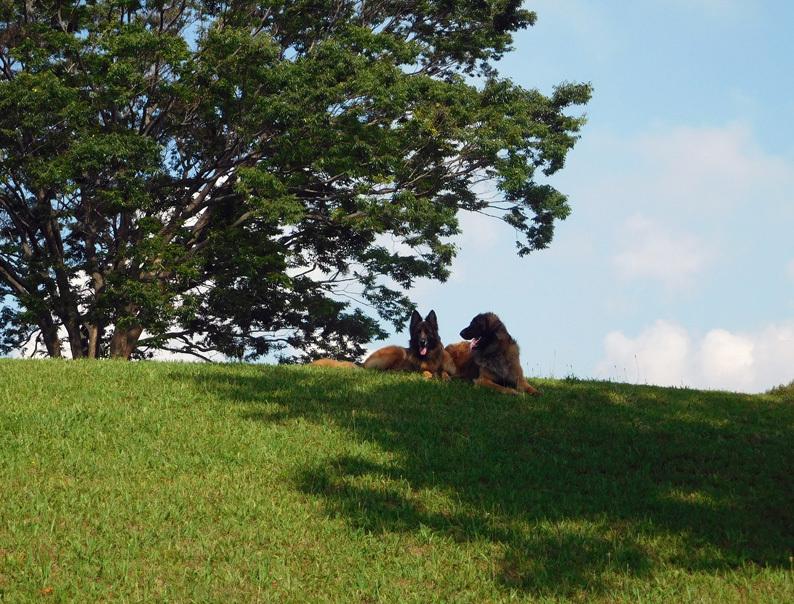 DSCN6675_玉八希望の丘遠景これもベスト_FB.jpg