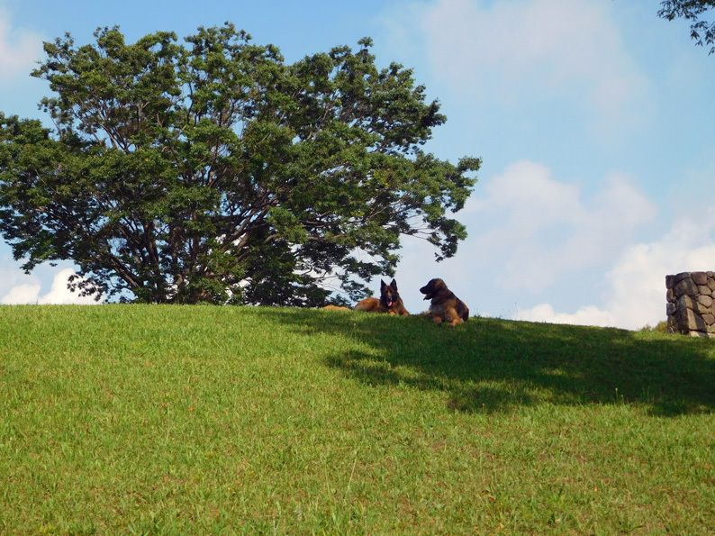 DSCN6680_玉八希望の丘遠景ベスト_FB.jpg