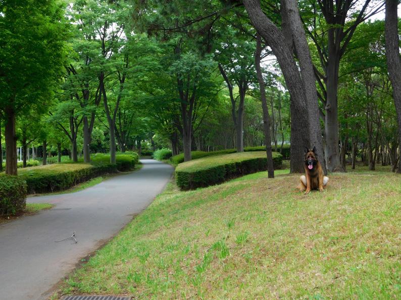 DSCN6779_玉八幡宮ロード_FB.jpg