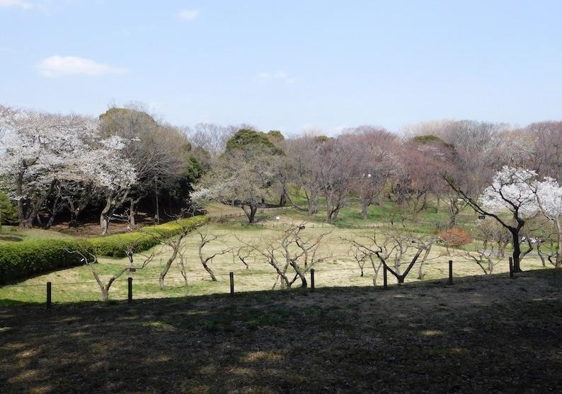 DSCN8775_桜はまだ森林公園_FB.jpg