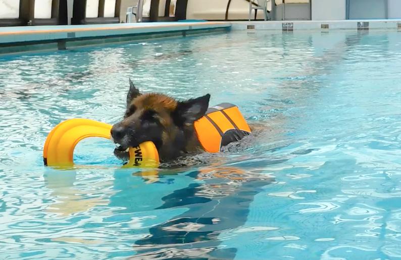 テス泳ぐよ_20190612_1_FB.jpg
