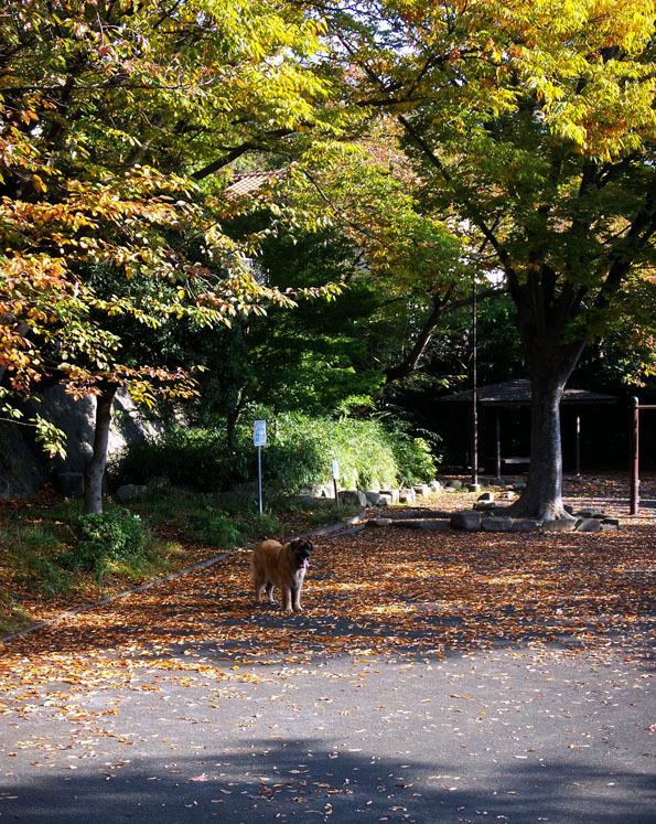 公園落ち葉PICT0887_BLOG.jpg
