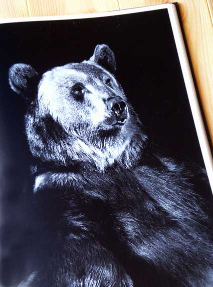animalportrait_4PICT3237.jpg