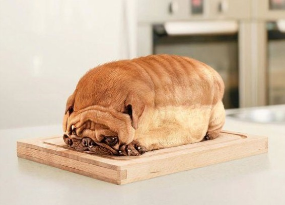 bread_dog.jpg